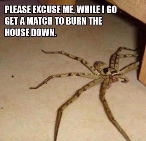 burn house